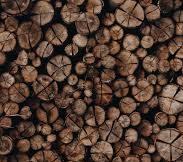 Экспертиза древесины